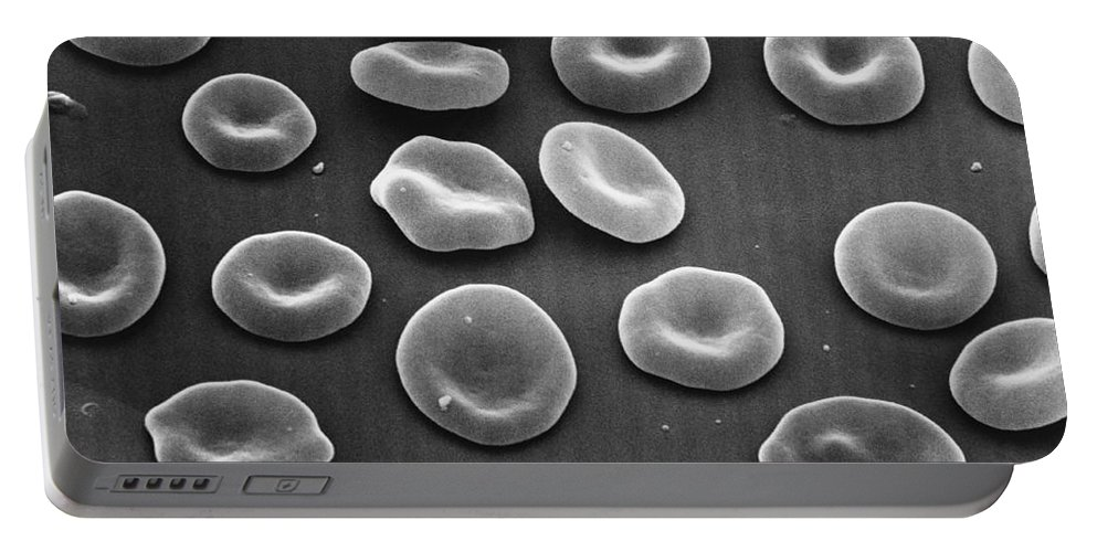Science Portable Battery Charger featuring the photograph Red Blood Cells Sem by David M. Phillips