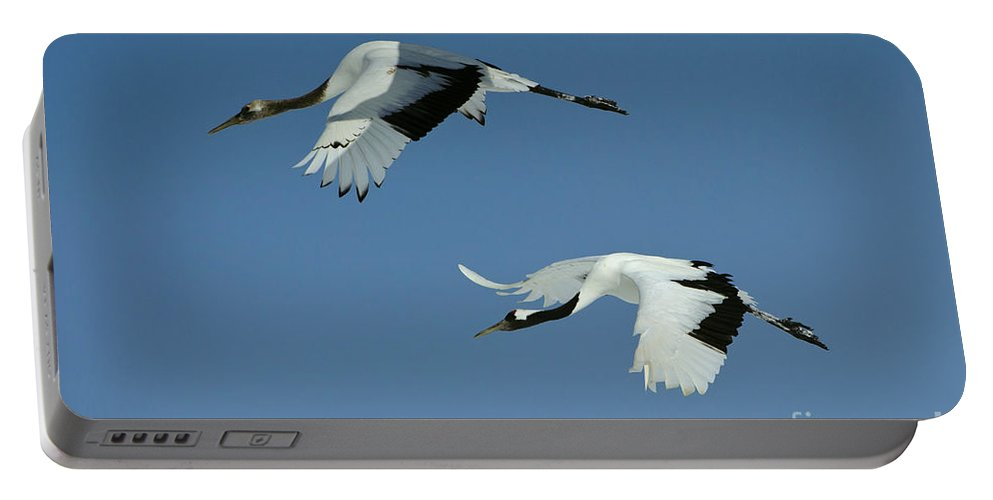 Asia Portable Battery Charger featuring the photograph Red-crowned Cranes by John Shaw
