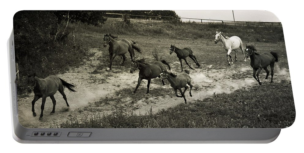 Horses Portable Battery Charger featuring the photograph Running Free by Angel Ciesniarska