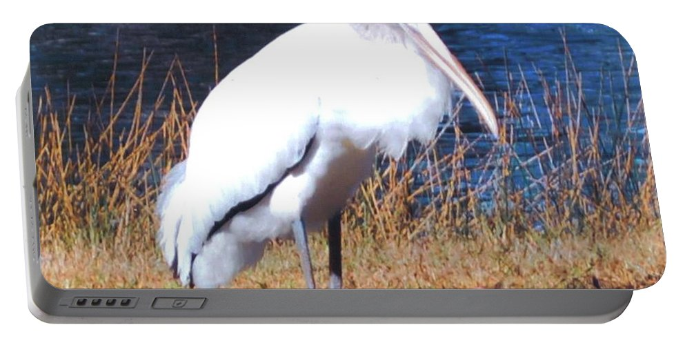 Resting Its Feet At Lakes Park In Ft.myers Portable Battery Charger featuring the photograph Woodstork by Robert Floyd