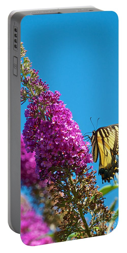 Butterfly Portable Battery Charger featuring the photograph Yellow Tiger Swallowtail Papilio Glaucus Butterfly by Mark Dodd