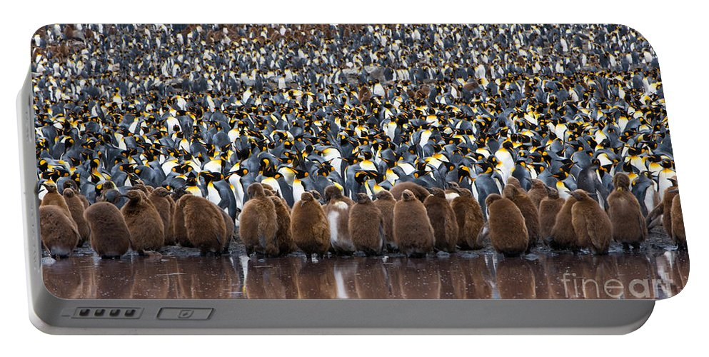 Animal Portable Battery Charger featuring the photograph King Penguins by John Shaw