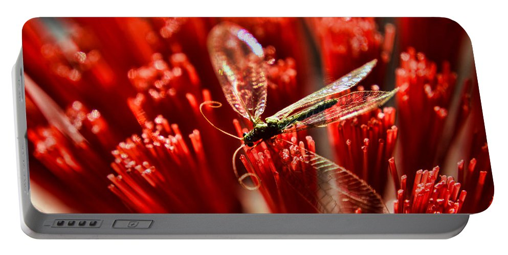 Bug Portable Battery Charger featuring the photograph Untitled by Adam Vance