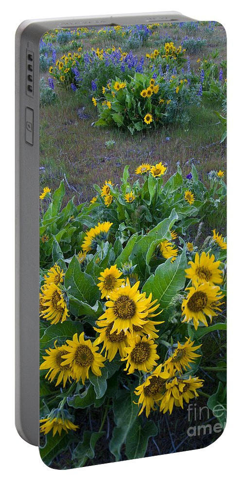 America Portable Battery Charger featuring the photograph Balsamroot by John Shaw