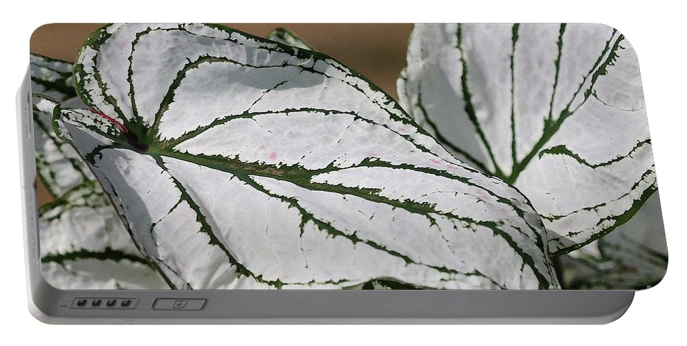 Caladium Portable Battery Charger featuring the painting Caladium Named White Christmas by J McCombie