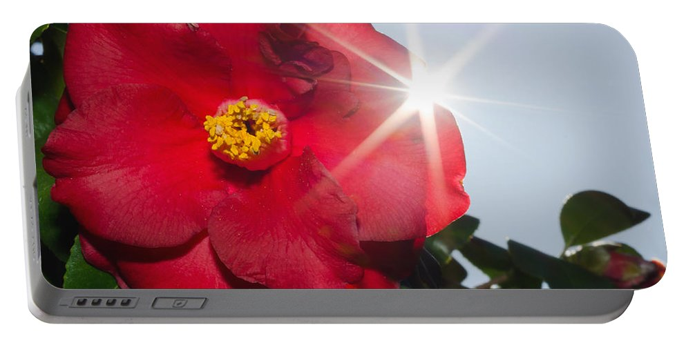 Camellia Portable Battery Charger featuring the photograph Camellia Flower by Mats Silvan