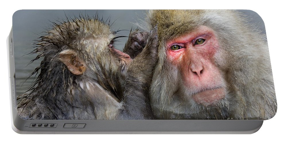 Japanese Macaque Portable Battery Charger featuring the photograph Japanese Macaques by John Shaw