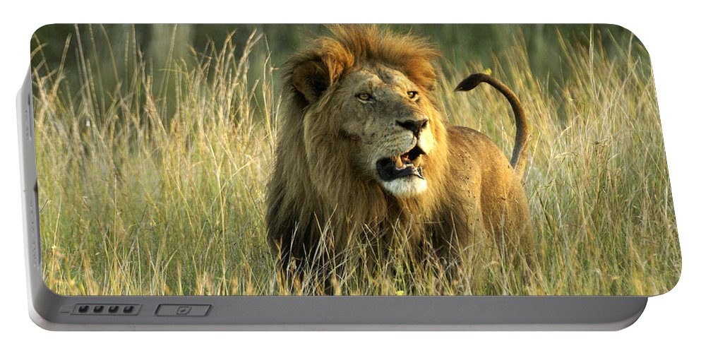 Lion Portable Battery Charger featuring the photograph King Of The Savanna by Michele Burgess