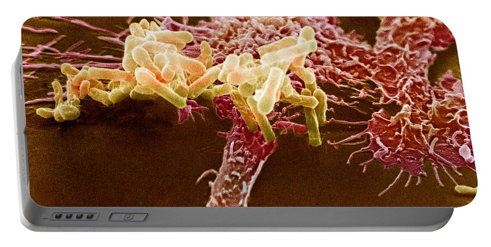 Macrophage Portable Battery Charger featuring the photograph Macrophage Ingesting Pseudomonas by David M. Phillips