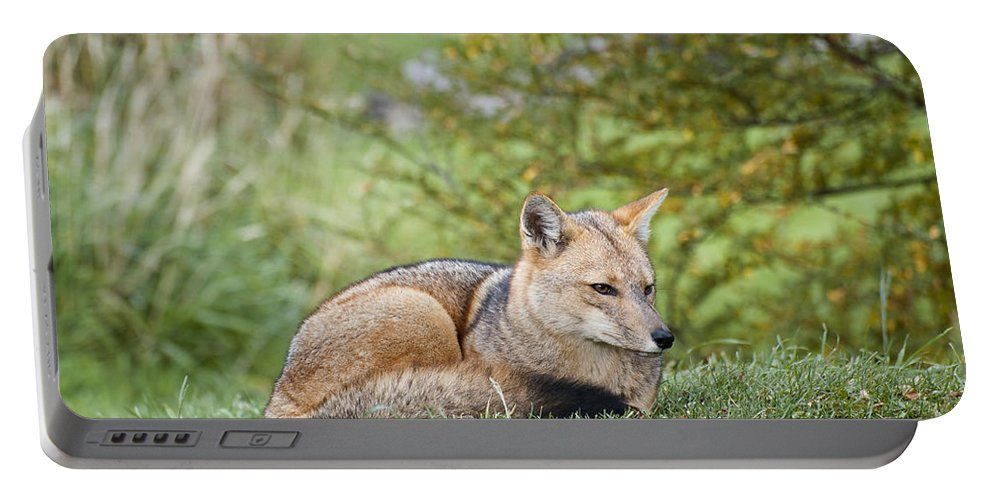 Chilean Fauna Portable Battery Charger featuring the photograph Patagonian Red Fox by John Shaw