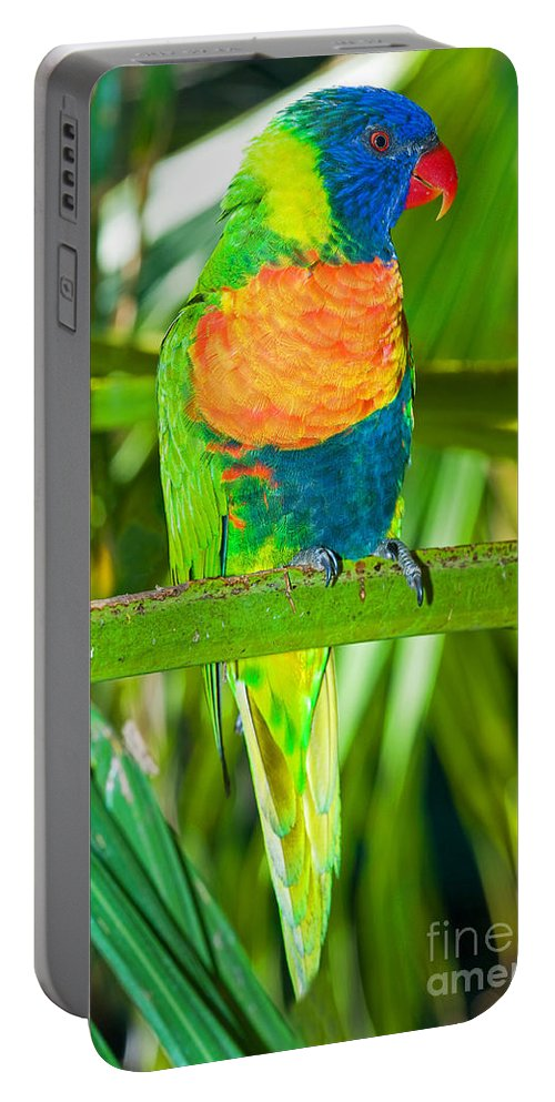 Nature Portable Battery Charger featuring the photograph Rainbow Lorikeet by Millard H. Sharp