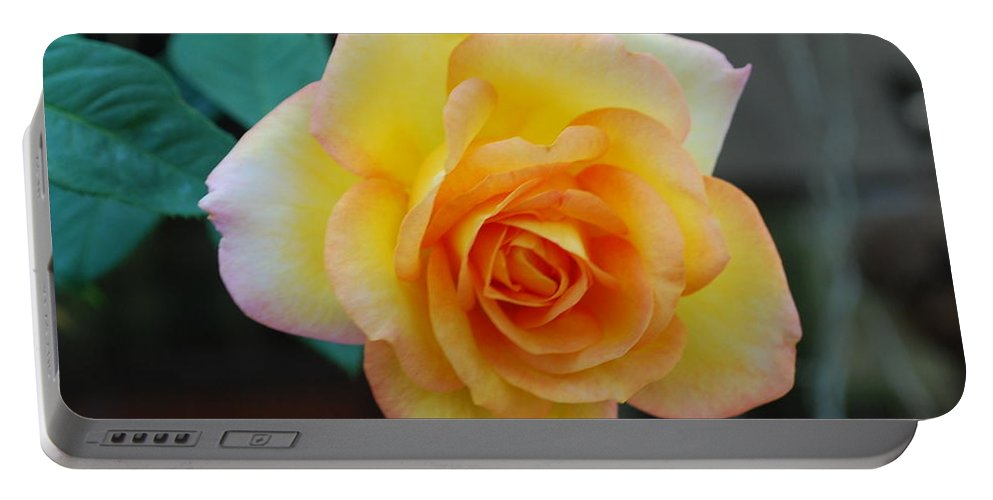 Pot Grown Portable Battery Charger featuring the photograph Rose by Robert Floyd
