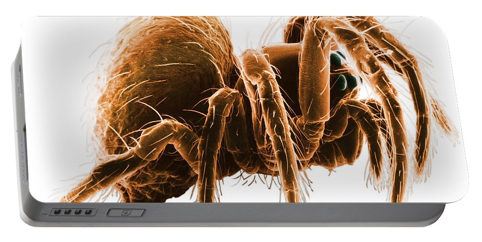 Wolf Spider Portable Battery Charger featuring the photograph Wolf Spider by David M. Phillips