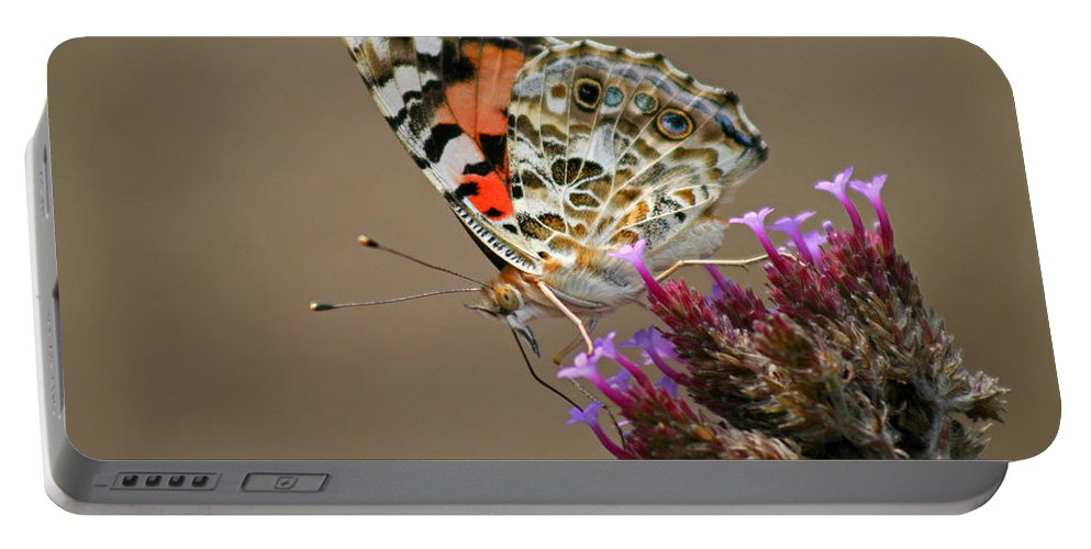 Portable Battery Charger featuring the photograph American Painted Lady Butterfly by Karen Adams