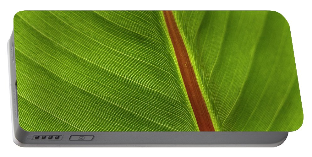 Leaf Portable Battery Charger featuring the photograph Banana Leaf by Heiko Koehrer-Wagner
