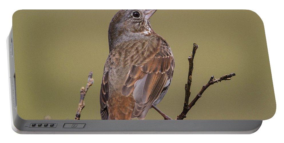 Doug Lloyd Portable Battery Charger featuring the photograph Fox Sparrow by Doug Lloyd