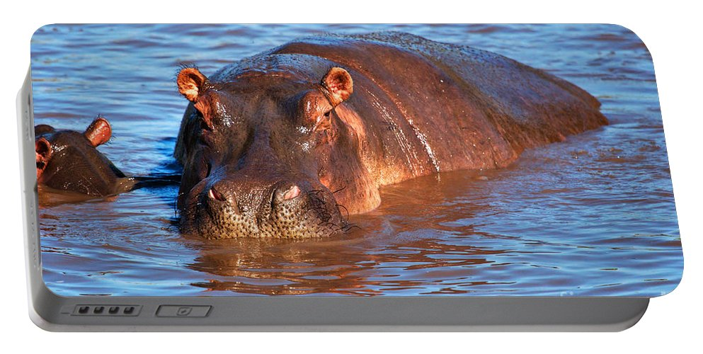 Hippo Portable Battery Charger featuring the photograph Hippopotamus In River. Serengeti. Tanzania by Michal Bednarek