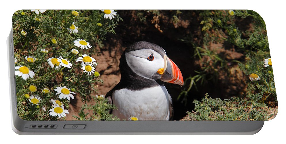 Puffins Portable Battery Charger featuring the photograph Puffin by Traci Law