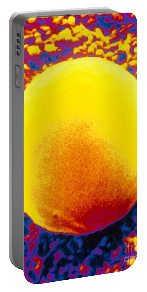 Sem Portable Battery Charger featuring the photograph Red Blood Cell, Sem by David M. Phillips
