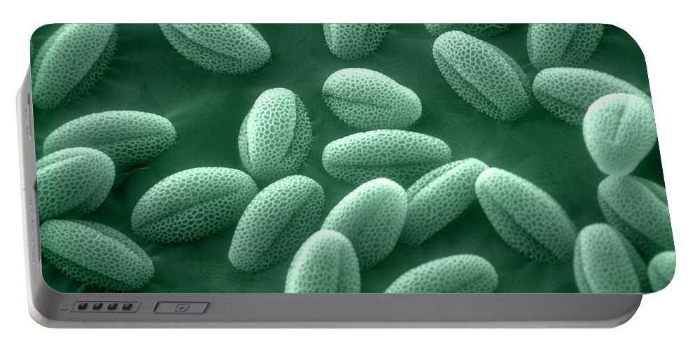 Sem Portable Battery Charger featuring the photograph Sem Of Grass Pollen by David M. Phillips
