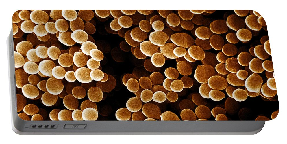 Bacteria Portable Battery Charger featuring the photograph Staphylococcus Aureus, Sem by David M. Phillips