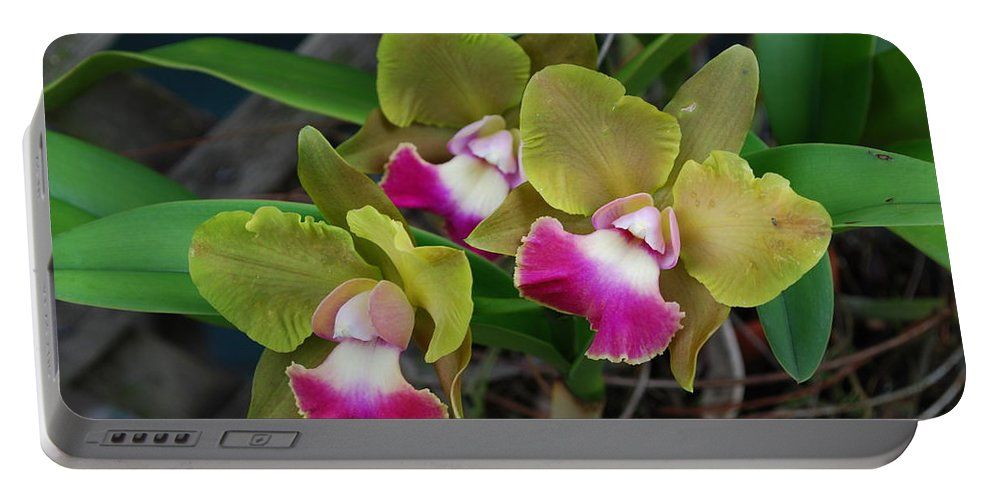 On Tree In My Yard Portable Battery Charger featuring the photograph Orchid by Robert Floyd