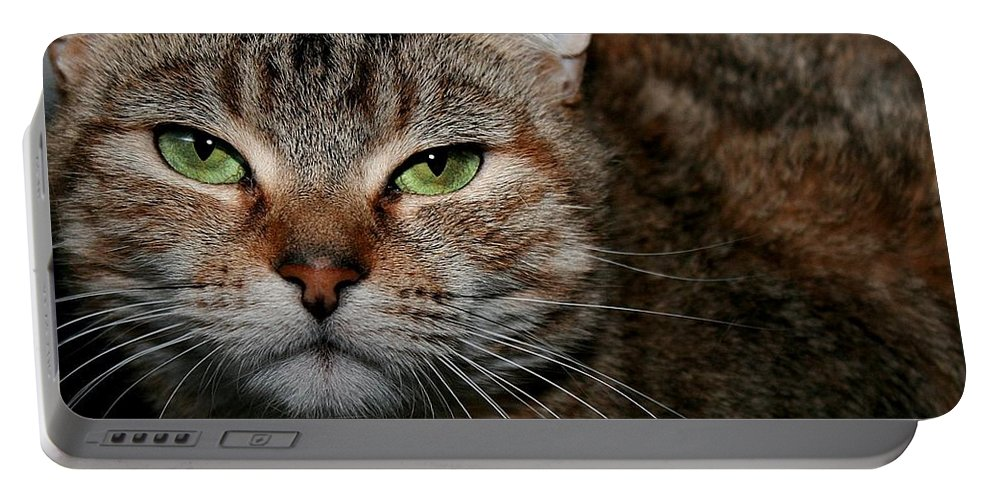 Brown Tabby Portable Battery Charger featuring the photograph Tabby by Joyce Baldassarre