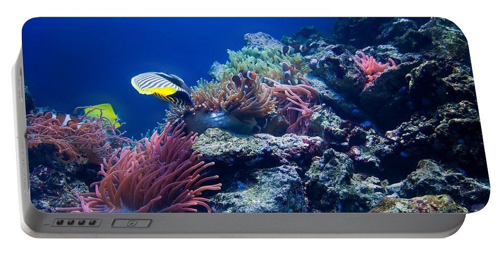 Fish Portable Battery Charger featuring the photograph Underwater Life by Michal Bednarek