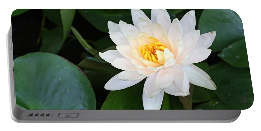 Waterlily Portable Battery Charger featuring the photograph White Water Lily by Irina Davis