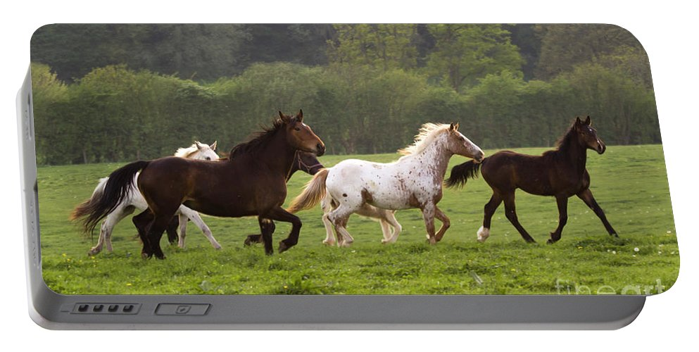 Horse Portable Battery Charger featuring the photograph Horses On The Meadow by Angel Ciesniarska