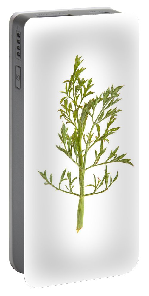 Isolated Portable Battery Charger featuring the photograph Leaf by Scott Sanders