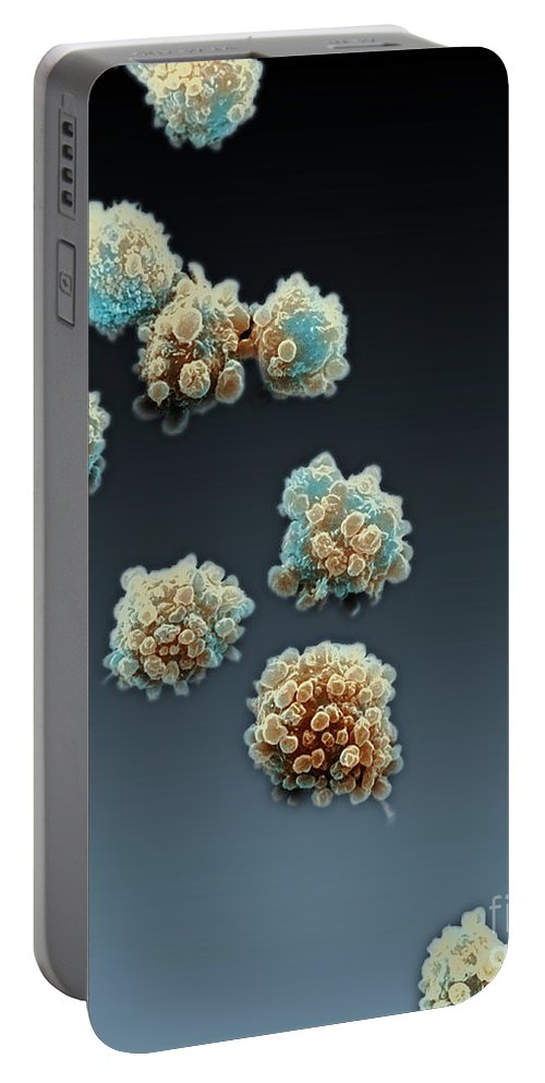 Lymphocyte Portable Battery Charger featuring the photograph Lymphocytes Undergoing Apoptosis, Sem by David M. Phillips