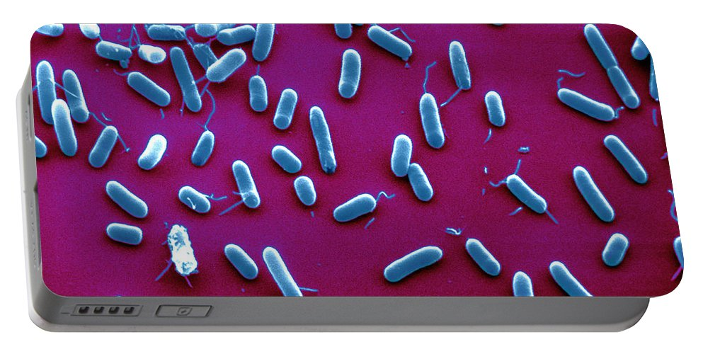 Sem Portable Battery Charger featuring the photograph Sem Of Haemophilus Influenzae by David M. Phillips