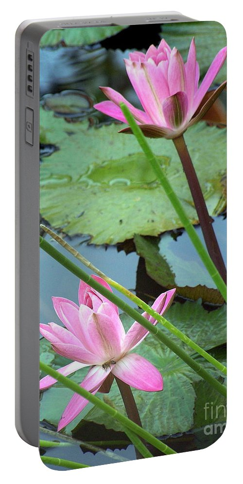 Waterlily Portable Battery Charger featuring the photograph Pink Water Lily Pond by Irina Davis