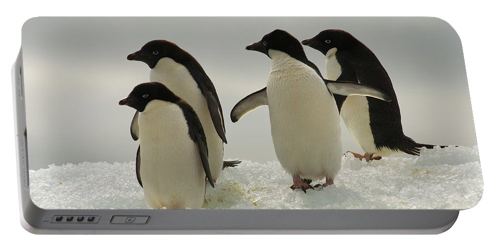 Iceberg Portable Battery Charger featuring the photograph Adelie Penguins by John Shaw