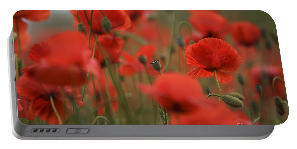 Poppy Portable Battery Charger featuring the photograph Red by Nailia Schwarz