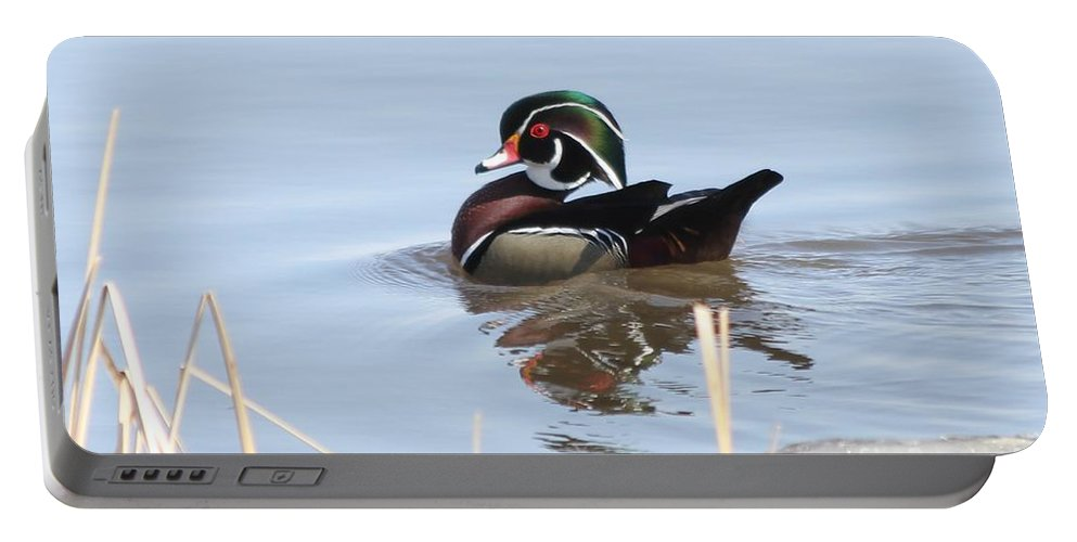 Wood Duck Portable Battery Charger featuring the photograph Wood Duck by Lori Tordsen