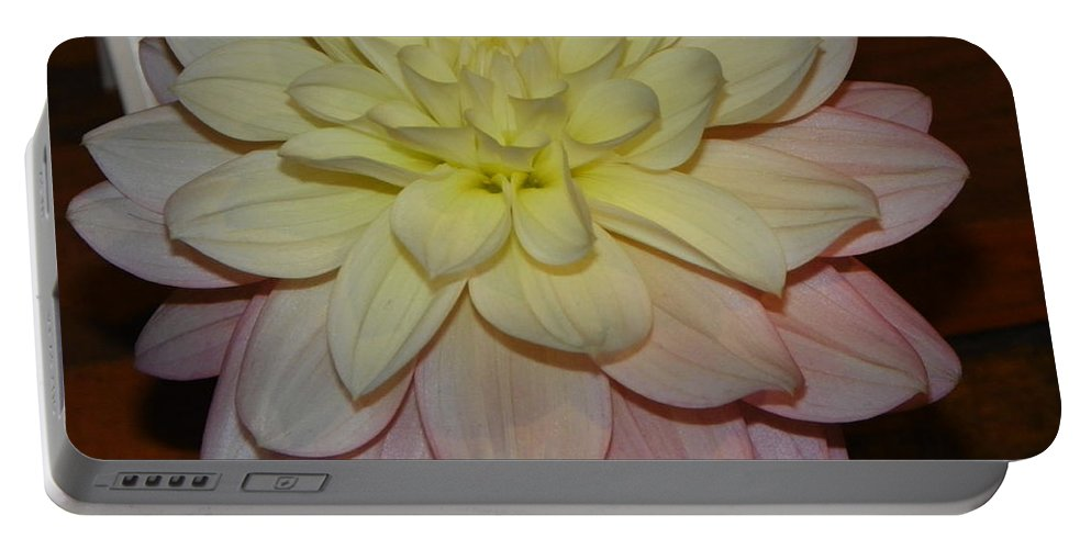 #928 D809 Dahlia Pink White Yellow Dahlia Thoughts Of You Portable Battery Charger featuring the photograph #928 D809 Dahlia Pink White Yellow Dahlia Thoughts Of You by Robin Lee Mccarthy Photography