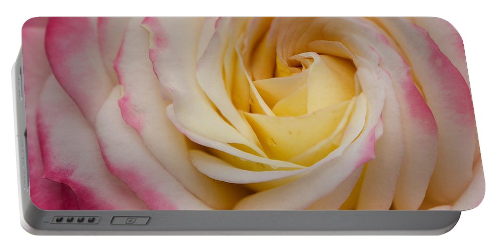 Rose Portable Battery Charger featuring the photograph A Beautiful Pink Rose In Summertime by TouTouke A Y