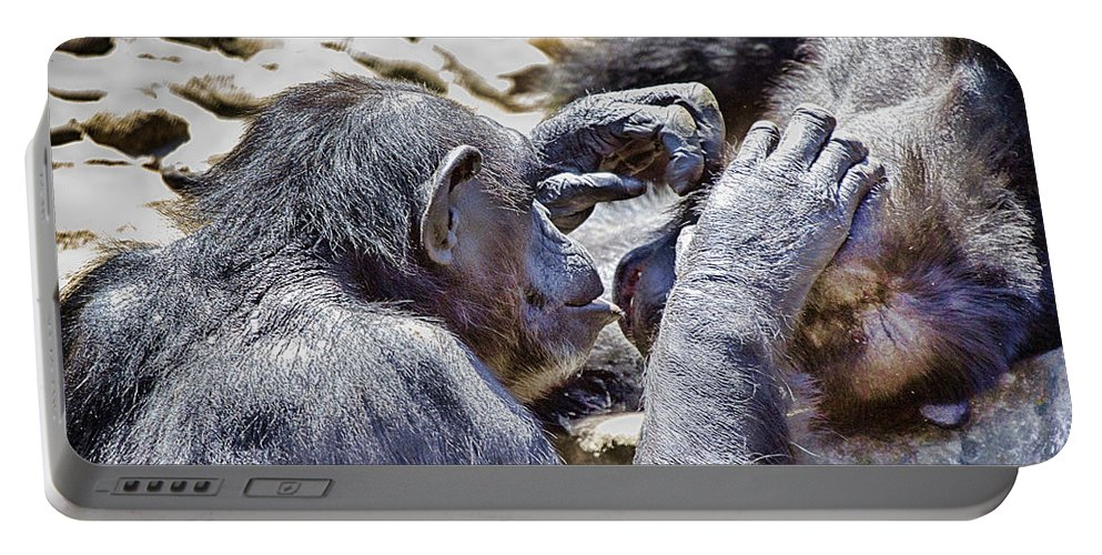 Chimpanzees Portable Battery Charger featuring the photograph A Bit Like Us V4 by Douglas Barnard