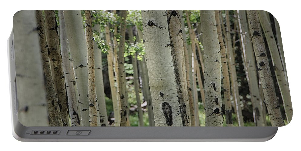 Birch Trees Portable Battery Charger featuring the photograph A Change Of Weather by Saija Lehtonen