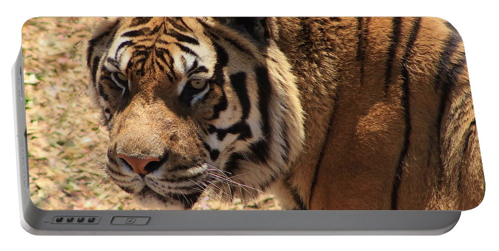 Tiger Portable Battery Charger featuring the photograph A Classical Beauty by Fiona Kennard