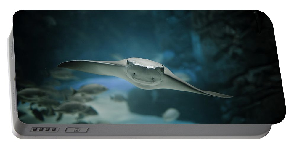 Animal Portable Battery Charger featuring the photograph A Crownose Ray Rhinoptera Bonasus by Christopher Kimmel