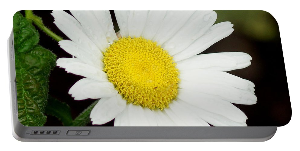 A Daisy If You-do Portable Battery Charger featuring the photograph A Daisy If You-do by Kim Pate