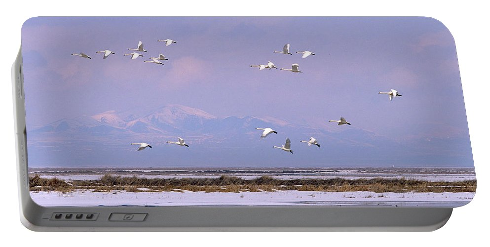 Bird Portable Battery Charger featuring the photograph A Flock Of Swans Flies Over Water by David Stubbs