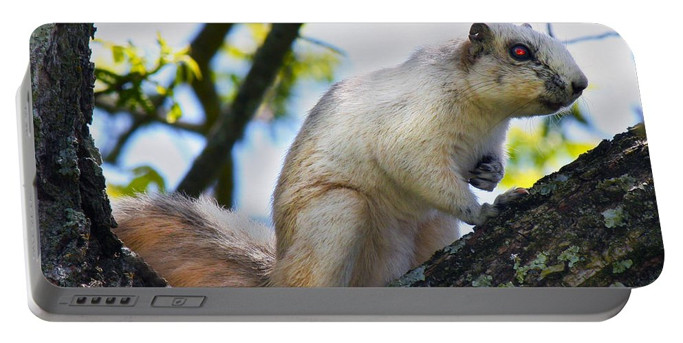Animal Portable Battery Charger featuring the photograph A Fox Squirrel Poses by Betsy Knapp