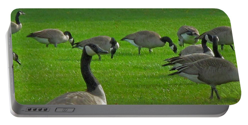 Lawn Portable Battery Charger featuring the photograph A Gaggle Of Geese by Ian MacDonald