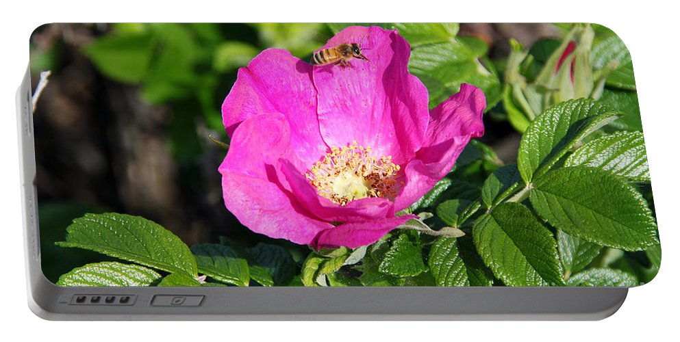 Rose Portable Battery Charger featuring the photograph A Hornet And Beach Rose by Deborah Bowie