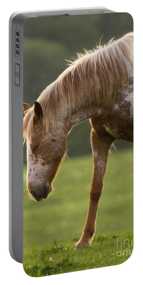 Horse Portable Battery Charger featuring the photograph A Little Nap by Angel Ciesniarska