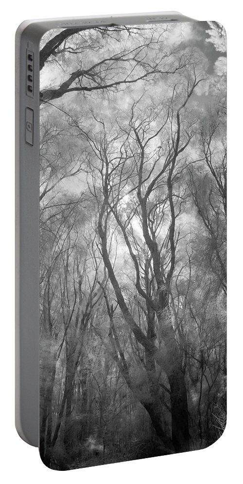 Beauty In Nature Portable Battery Charger featuring the photograph A Low Angle View Of A Ironwood by Jonathan Kingston